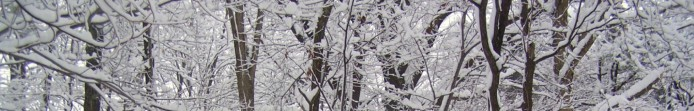 cropped-cropped-snowy-woods.jpg